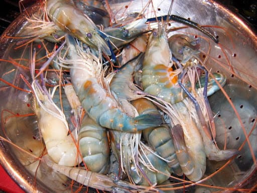 what is shrimp roe